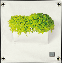 Plant Bag 'Green Pockets' AMMA | White
