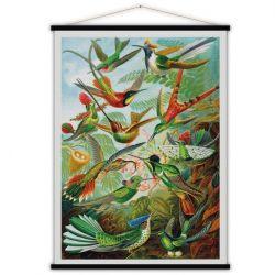 Vintage-Poster | Kolibris