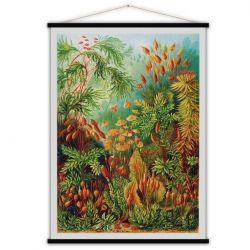 Jahrgangs-Poster | Muscinae