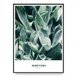 Poster | Aloe Vera
