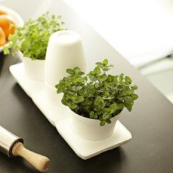 Minigarden Basic S Pots White