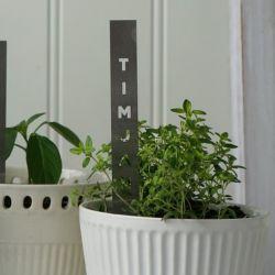 Herb Stick | Timjan