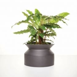Plant Pot Spool | Black