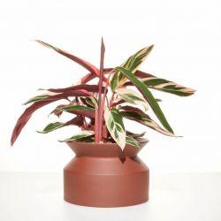 Plant Pot Spool | Terracotta
