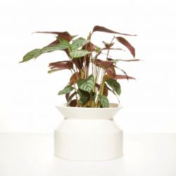 Plant Pot Spool | White