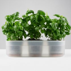 Triple Till Planter for Fresh Herbs