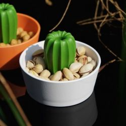 Container Cacnuts | White/Green