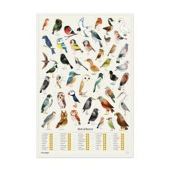 Poster Der Chartologe | Gartenvögel