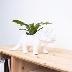 Blumentopf Dinosaurier | Tricerapot