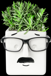 Plant Holder Face | White