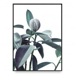 Plakat | Ficus