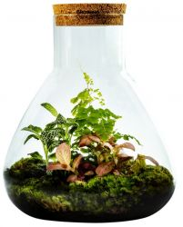 DIY Plant in Erlenmeyer Large | Botanische Mix