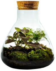 DIY Plant in Erlenmeyer Medium | Botanische Mix