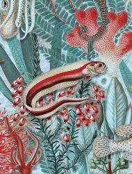 Wandtapete Underwater Jungle 4 Blätter | 687
