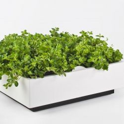 Indoor Garden Karoo with Potting Soil | White
