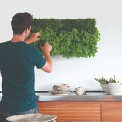 Indoor Garden Karoo with Potting Soil | Grey