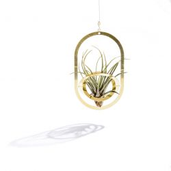 Air Pendant | Shiny Brass