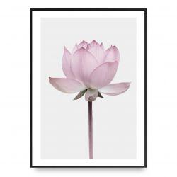 Poster | Lotus 1