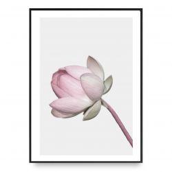 Plakat | Lotus 2