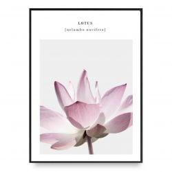 Poster | Lotus 4