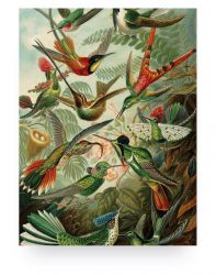 Holzdruck Exotic Birds