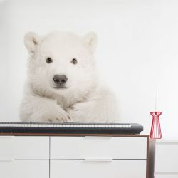 Wall Sticker | Polar Bear