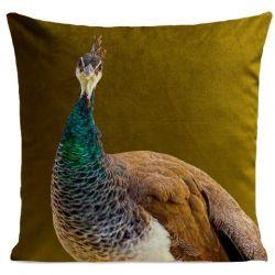 Pillow Cover | Mme Peacock