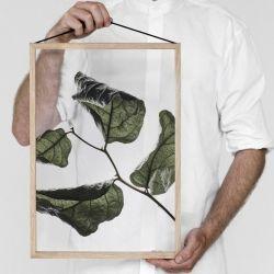 Floating Leaves 03