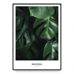 Poster | Monstera
