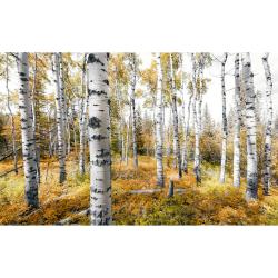 Fotoplakkaat Espenbos | 450 x 280 cm