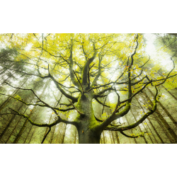 Photomural Dream Tree | 450 x 280 cm