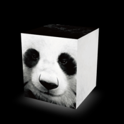 Sit On Everything Cube | Panda