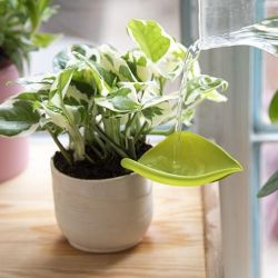 Funnel Watering Plants Leaflow | Set of 3