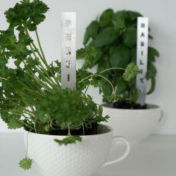 Herb Stick | Persilja