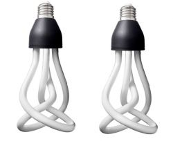 2 Bulbs of Plumen 001