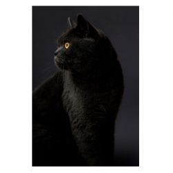Print Cat