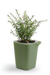 Zelfbewaterende Plantenpot Oasis Vierkant S | Groen/Grijs