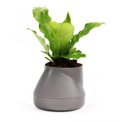 Self-watering Plant Pot Hill S | Grey