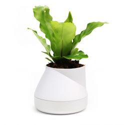 Self-watering Plant Pot Hill S | White