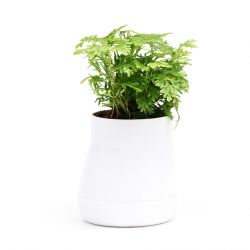 Selbstbewässernder Blumentopf Hill L | Weiß