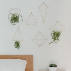 Wall Decoration / Plant Hanger | Gold