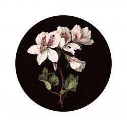 Wandtapete Kreis White Flowers