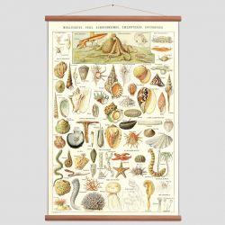 Vintage Poster Sealife