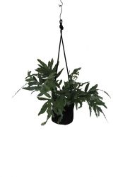 Single Flower Pot | Black