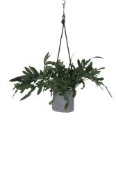 Single Flower Pot | Grey