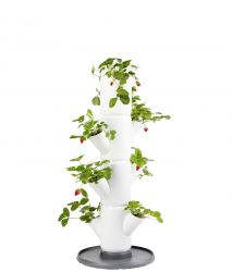 Strawberry Tower Starter SISSI Classic | White