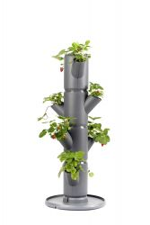 Strawberry Tower Starter SISSI Classic | Anthracite