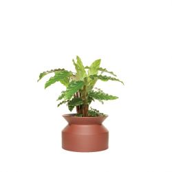 Plant Pot Spool | Burnt Terracotta