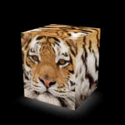 Sit On Everything Cube | Tiger