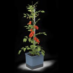 Tomato Pot TOM TOMATO | Blue